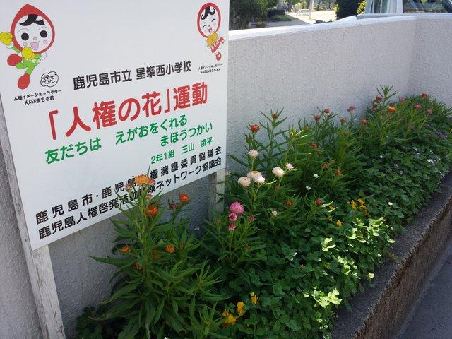 花壇の花、ボード