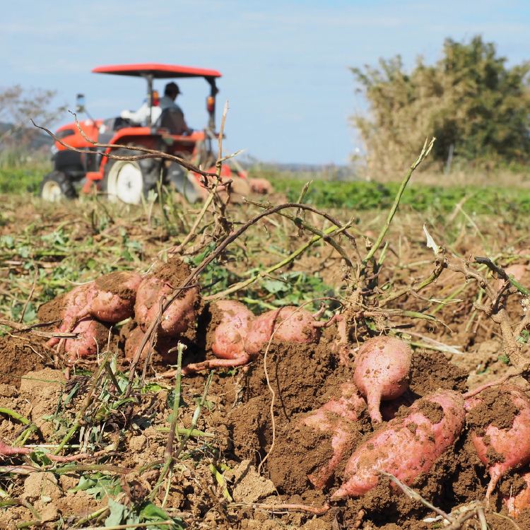 鹿児島の農林水産業の方へ